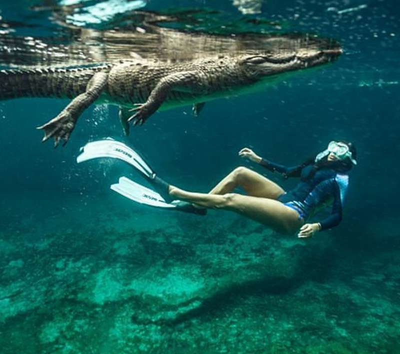 Woman swimming underwater will crocodile
