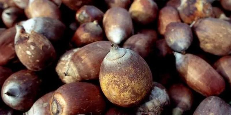 Babassu nuts