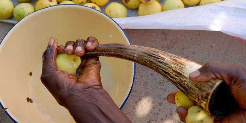 Man preparing marula fruit