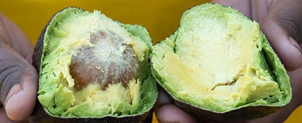 Geteilte Avocado