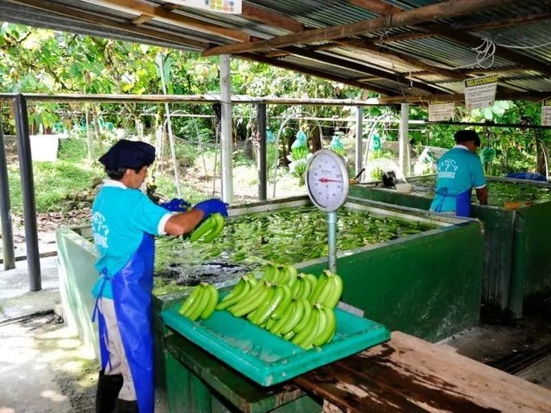 Mujer lavando bananas