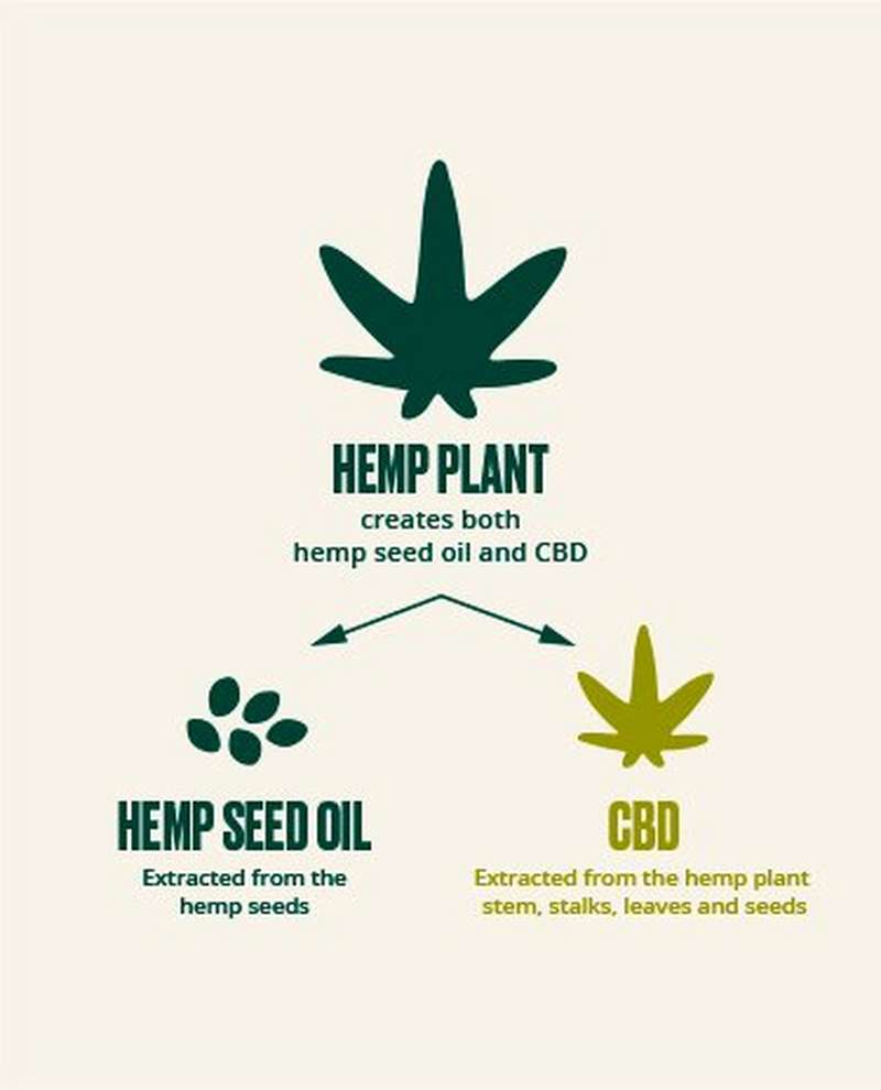 Diagram showing hemp seed oil is extracted from the seeds of the hemp plant and CBD is extracted from the hemp plant stem, stalks, leaves and seeds