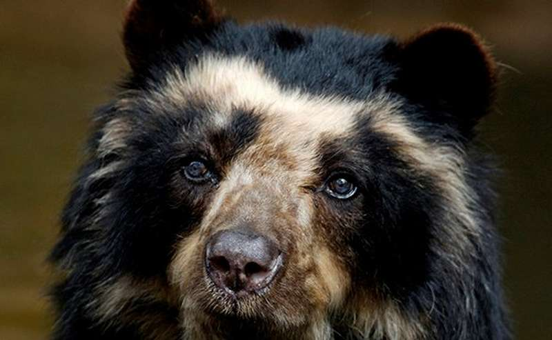 Bear's face