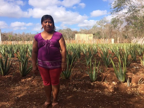 Woman standing in field of aloe vera