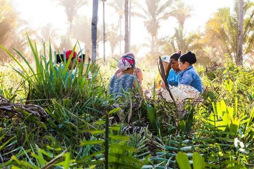 Women working in field of Babassu