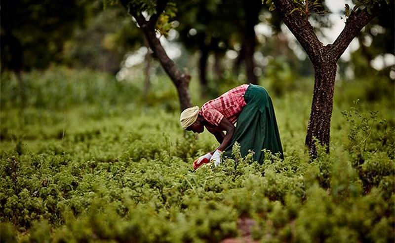 Vrouw die in een veld aan het werk is