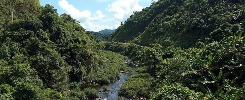 Imagen del Bosque Khe Nuoc Trong en Vietnam