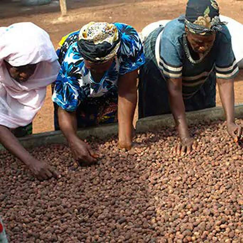 Three women working with shea nuts