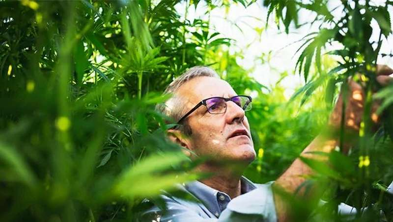 Man in field of hemp